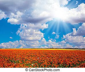 The bright sun illuminates buttercups