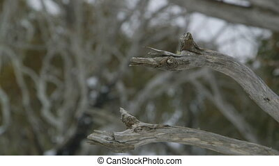 The broken edges of two branches of a tree - A still close...