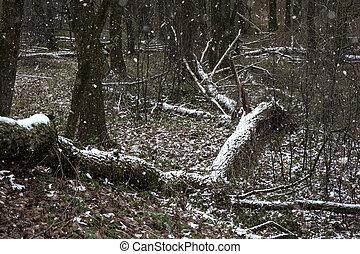 broken trees in winter forest