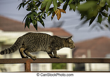 The brown cat is climbing the fence iron rust.