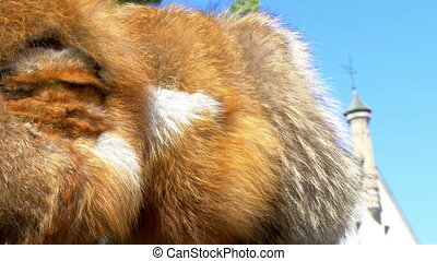 The brown fur of a viking in Estonia