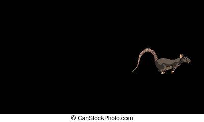The brown rat runs animation Alpha Matte