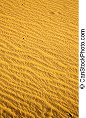 brown sand dune in the sahara