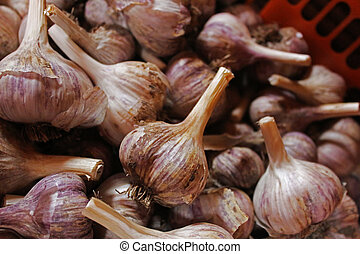 The bulbs of garlic in a red basket