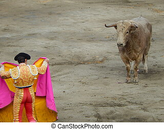 The bull stares at the torero during a bullfight.