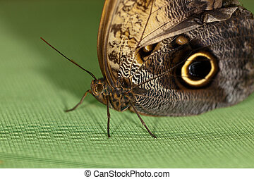 The butterfly close up