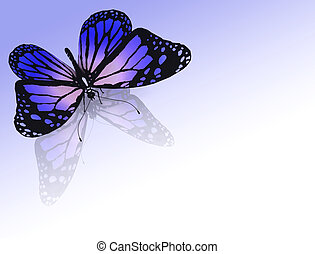 butterfly on a color background