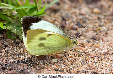 The butterfly on sand