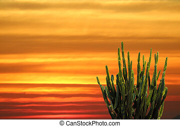 The cactus stand on the sand and the rainbow sky at sunset
