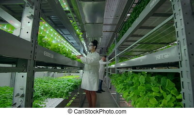 the camera moves along the corridor, the vertical firm follows the scientist from the back, a group of scientists agronomists investigate, touch hands and discuss the results of the grown plants