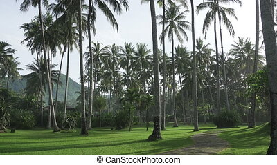 The camera moves on Coconut Palm Trees in Palm Grove on Tropical Island.
