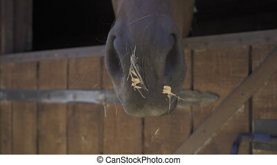 The camera slide on the horse's nose brown color. A lovely horse in a ranch stall or farm. Hippotherapy is a concept. High quality 4k footage.