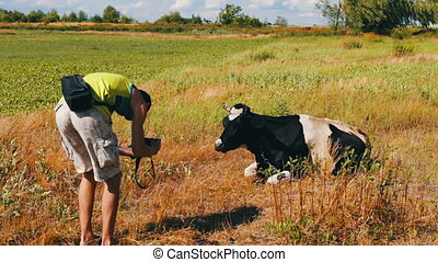 The cameraman shoots the grazing cow on video camera - The...