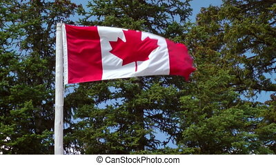 Canadian Flag - The Canadian Flag Flying