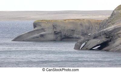 The Cape whale in the Barents sea, Novaya Zemlya...