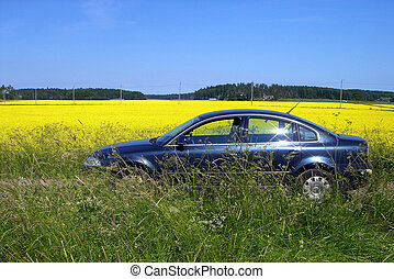 The car on a glade