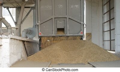The car truck ships out corns or grains of rye into the...