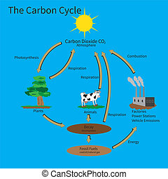 The Carbon Cycle showing how carbon is recycled in the...