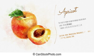 The card about Apricot and its description - Animated...