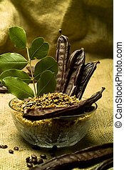 The Carob (Ceratonia siliqua)