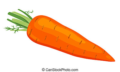 The carrot. Vector illustration. Isolated on white...