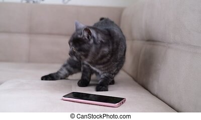 The cat behaves restlessly next to smartphone - The cat...