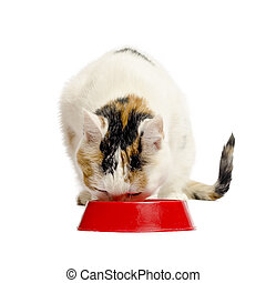 The cat eats from a bowl. The house favourite isolated on a...