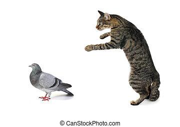 cat - the cat hunts on a dove