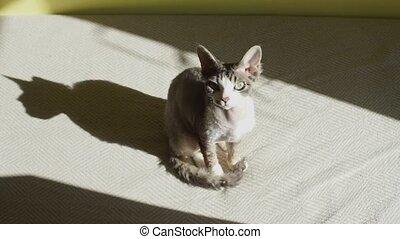 the cat in the sunlight looks around