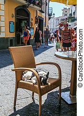 The cat is lying on a chair.Street scene of Via Lorenzo d'Amalfi, the main shopping street in Amalfi Town, Italy