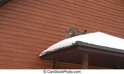 The cat is on the roof of a house