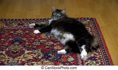 The cat is resting on a rug.
