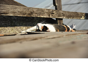 the cat is sleeping on a wood wall