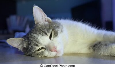 the cat is sleeping on the table in the evening. cat pet...
