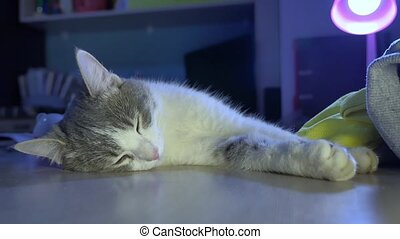 the cat is sleeping on the table in the evening. cat pet is...