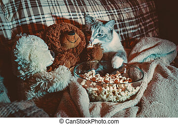 The cat is watching a movie with bears and eating popcorn