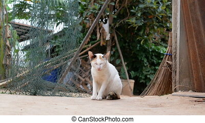 The cat living at the countryside of Thailand