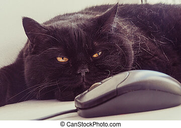 The cat looks at the computer mouse