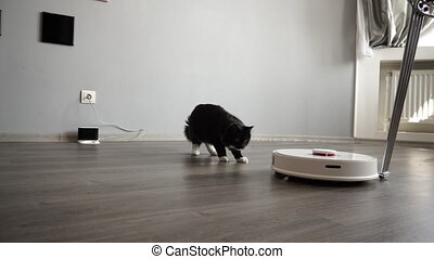 The cat looks at the smart robot vacuum cleaner sliding...