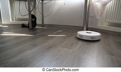 The cat looks at the working robot vacuum cleaner with...