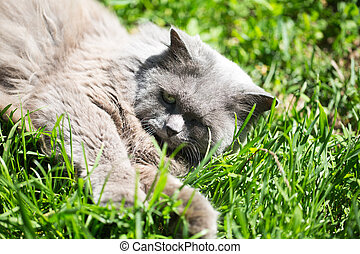 The cat on a grass