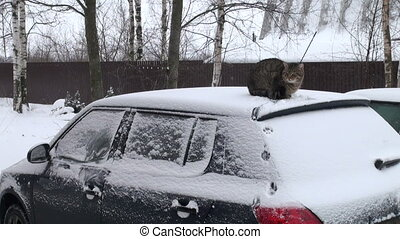 The cat on the roof of the car