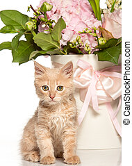 The cat on white background with flowers