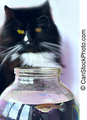 The cat stares at the fish in the jar