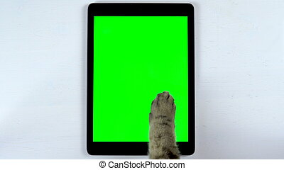 The cat uses a tablet. Close-up of cat's paw typing on the tablet. Tablet with a green background.