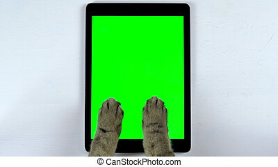 The cat uses a tablet. Close-up of cat's paws typing on the tablet. Tablet with a green background.