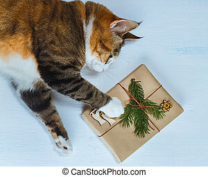 The cat wants to open a Christmas gift