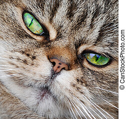 The Cat\\\'s Whiskers - A photograph of a cat\\\'s face,...