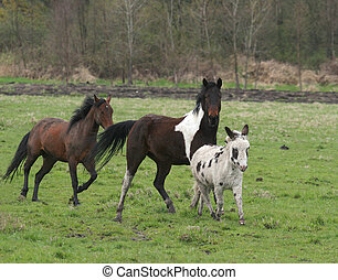 Horses and donkey running through pasture