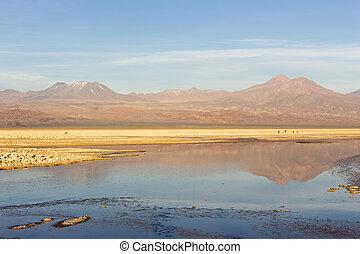 The chaxa lagoon at sunset